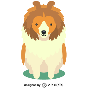 sheltie,puppy,breed,dog,cute,flat,pet,animal,purebred,puppies,dog breeds,shetland sheepdog