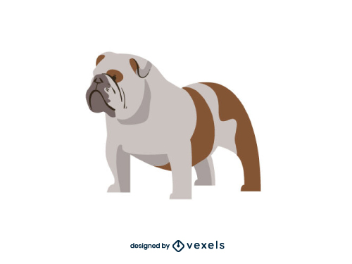 English Bulldog Breed Dog Illustration