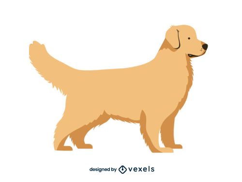 Golden Retriever Dog Flat Cartoon Breed
