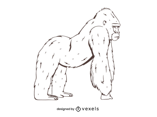 Gorilla Drawing Outline Hand Drawn