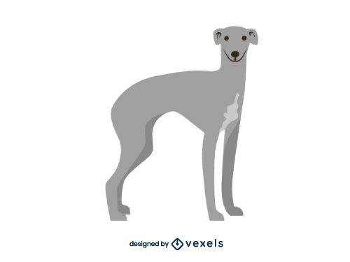 Greyhound Dog Flat Cartoon Breed