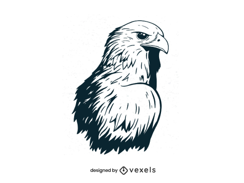 Eagle Head Hand Drawn Hawk Illustration