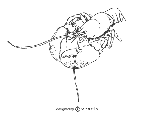 Lobster Seafood Shellfish illustration Hand Drawn