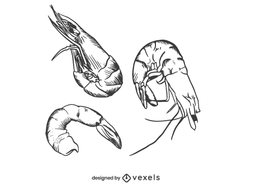 Shrimp Seafood Shellfish illustration Hand Drawn
