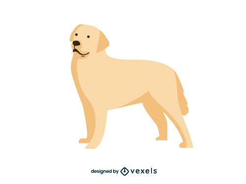 Labrador Breed Dog Illustration