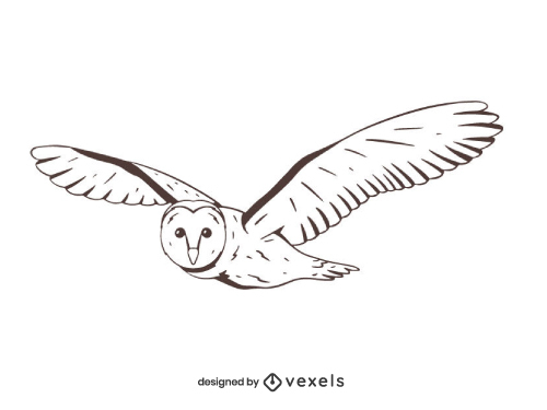 Owl Drawing Outline Hand Drawn