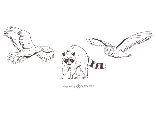 Wild animals Outline Eagle Raccoon Owl